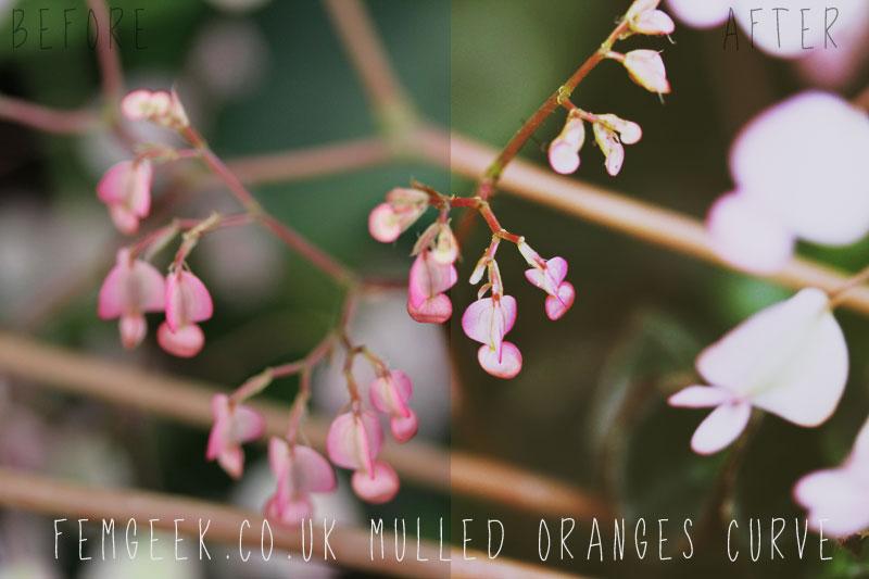 12 Days of Femgeek Christmas - Mulled Oranges Curve