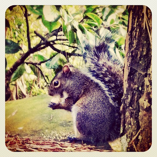 Hungry squirrel at the tea garden by The Shutterbug Eye™