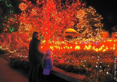 VanDusen Gardens Festival of Lights 2012 Christmas Celebration Connects People to the Natural Environment for the Holiday Season