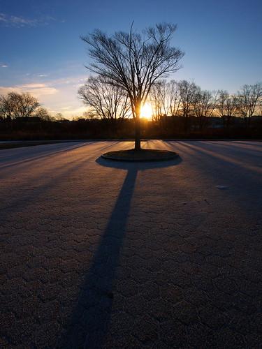 morning winter tree lumix 朝日 gf2