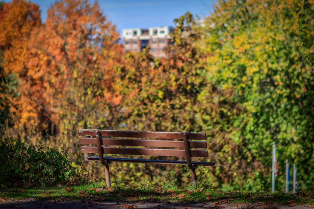 The Lonely Bench