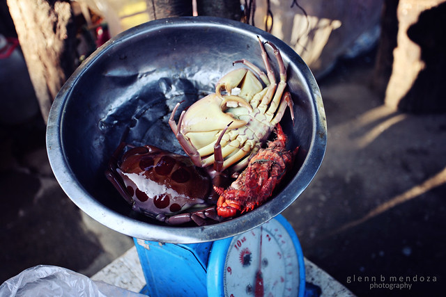 Our Crabs!