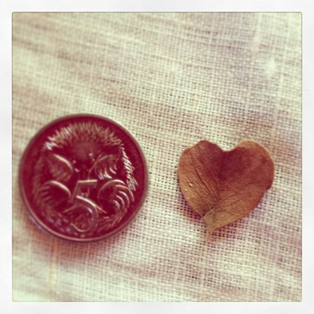 Harry brought me a heart shaped leaf, tinier than a 5c coin