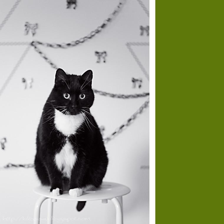 washi cat