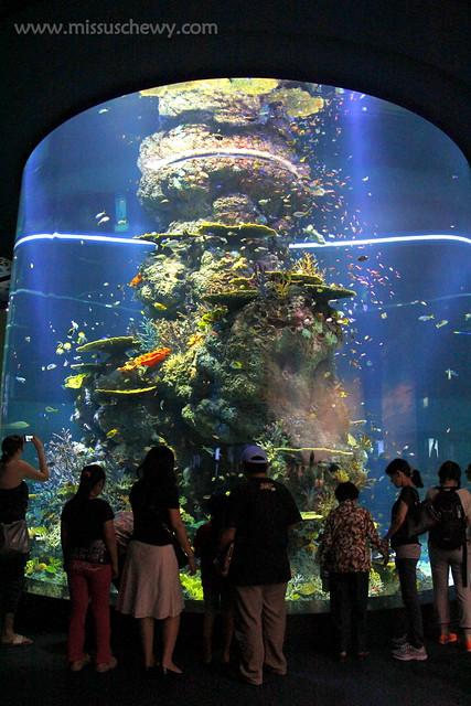RWS S.E.A Aquarium 492