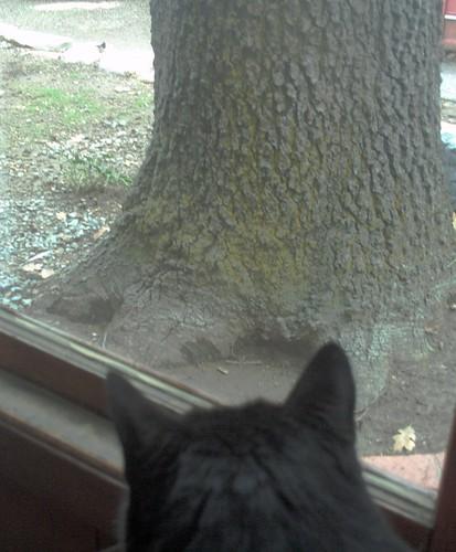 Bobby Watch The Chickadee