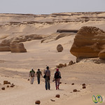 Desert Walk, Valley of the Whales - Fayoum, Egypt
