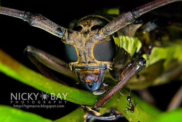 Nocturnal Creatures of Mandai