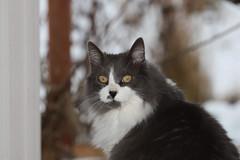 Domestic Animals - cats, dogs, farm animals