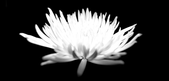 flower13resize