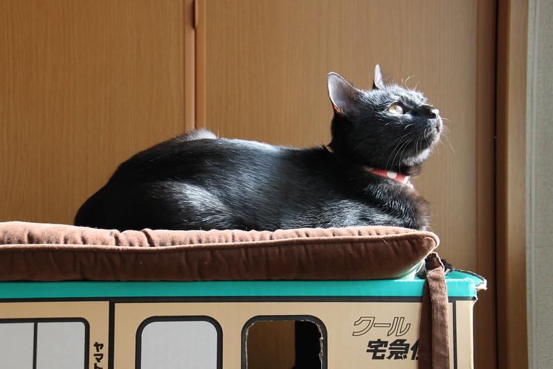 たそがれ黒猫