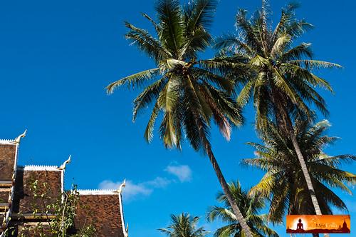 Templos y palmeras en Luang Prabang