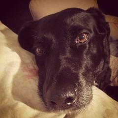 Last Austin dog photo :(