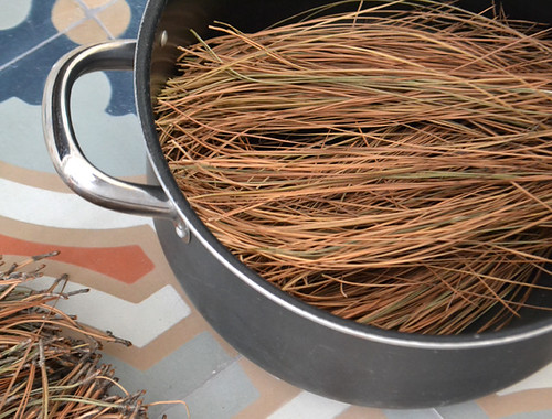 Cooking Pine Needles