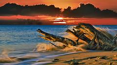 Driftwood Heywood Beach Speighstown Barbados