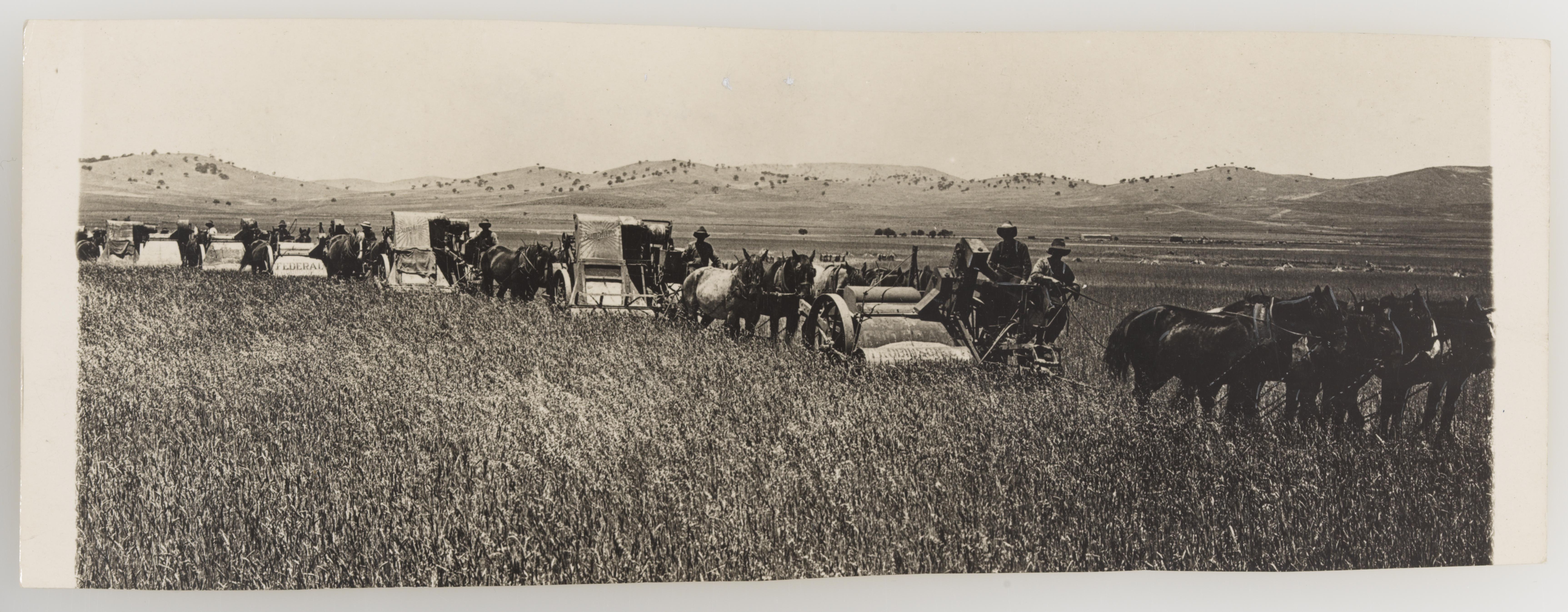 Photographs collected by Rev. James Colwell portraying rural and agricultural scenes and activities - Series 03: Harvesting, 1921-1924