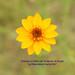 """Agradecimiento a todos lo que participan en el Grupo """"La Naturaleza hecha Flor"""" by roblestjorge"""