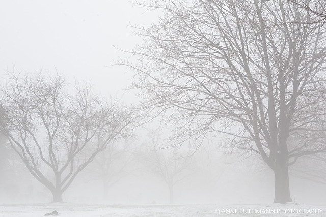 Foggy_Winter_Landscape-04