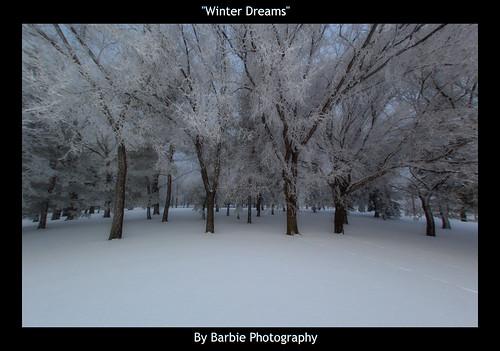 winter cold nature landscape moments frost nikond50 saskatchewan emotions barbiephotography