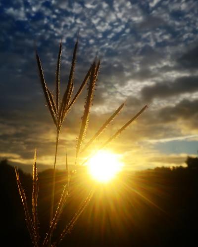 sunset sky sun silhouette photoshop photography nikon dusk philippines silhouettes kitlens sunsets manila nik nikkor sunrays goldensunset pinas phillippines sunsetseries takipsilim nikonphilippines skycanvas stripedclouds silhouettephotography i♥pinas amorsiko sunisdown nikond3100 nikond3100philippines itsmorefuninthephilippines sunsetgoddess mariáconcepcíonphotography™ 2011© mariáconcepcíonphotography sunset2013 itsmoreromanticinthephilippines itsalwayssummerinthephilippines sunsetunfolds agoldensunsetunfolds stripedcloudsonthebackground