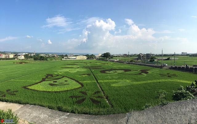 花壇彩繪稻田_012