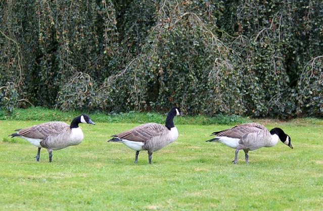 Park Kasteel van Arenberg, Heverlee (Leuven)