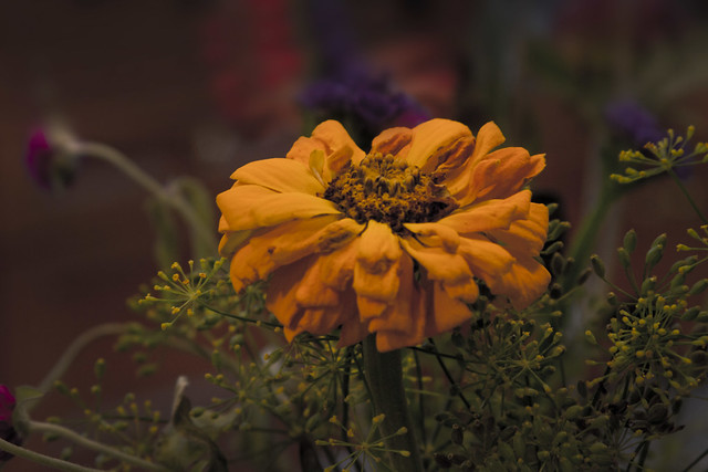 polleny flower (2016)