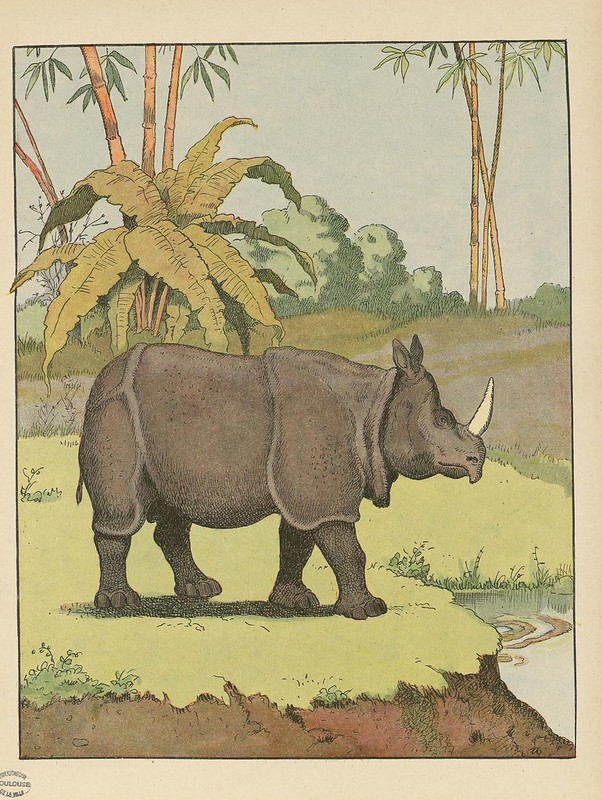 colour lithograph of rhino by B Rabier 1920s