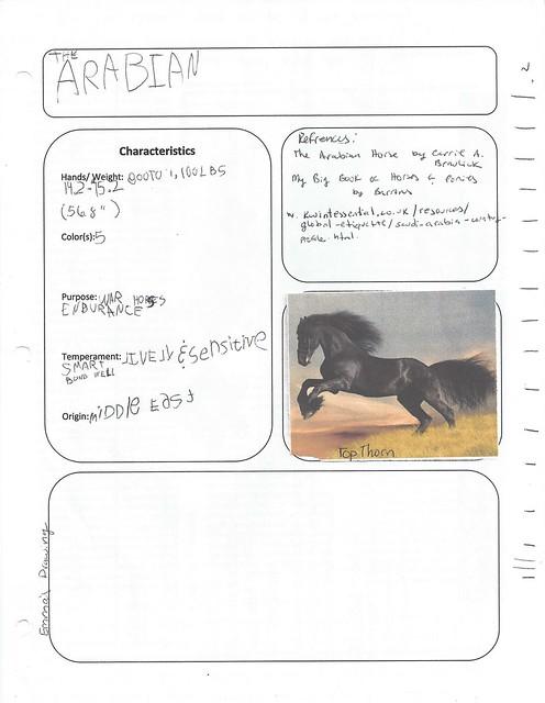 arabian horse geo