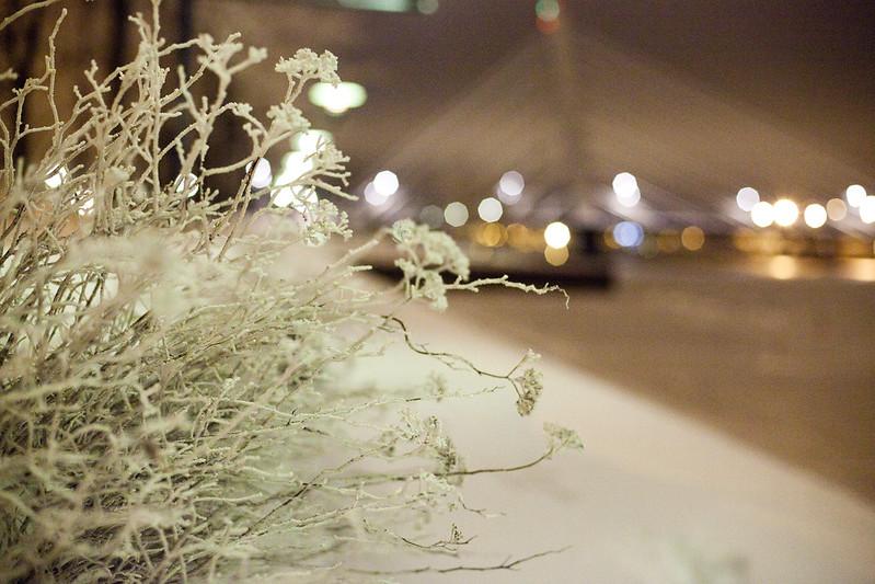 19/12 (Frosty)