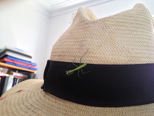 Praying Mantis on hat by vogmae
