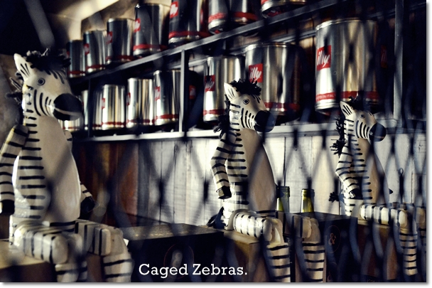 Caged Zebras