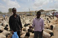 Camel Market (19)