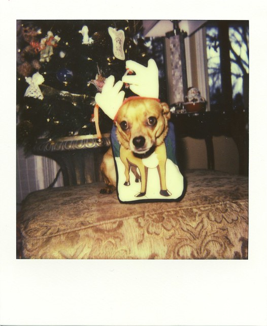 polaroid - the reindeer dog