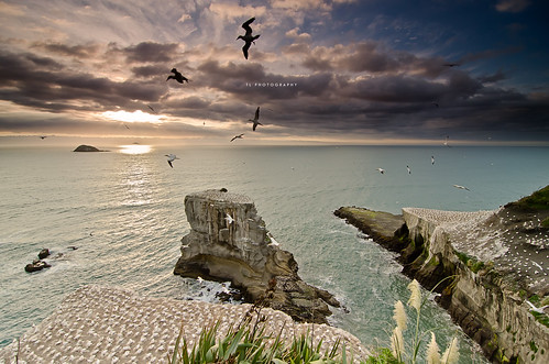 sunset sea newzealand seascape water clouds rocks auckland hitech gannets nationalgeographic muriwai ndfilter ndfilters muriwaibeach hitechfilters hitechnd