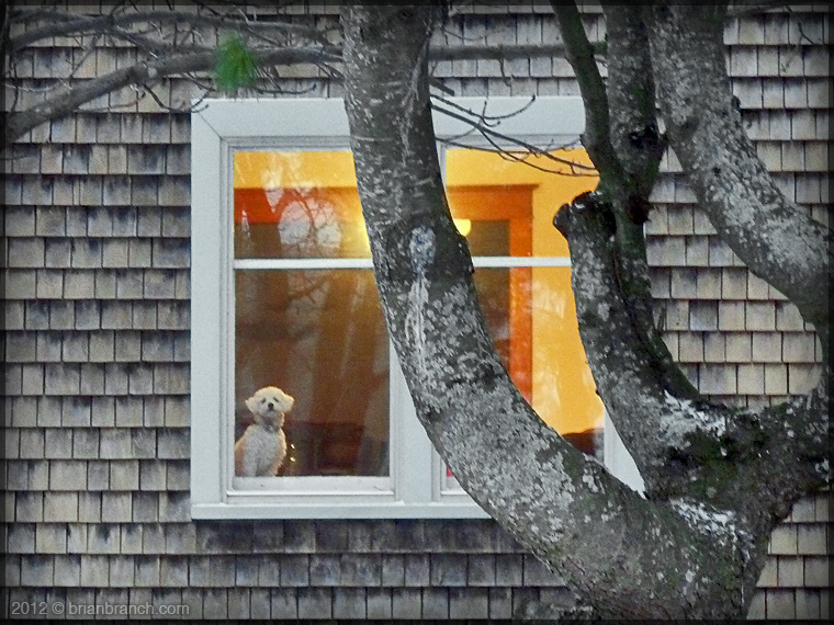 P1290647_dog_window