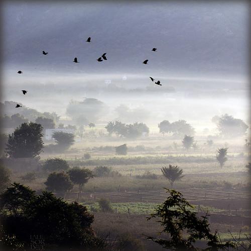 morning india nature birds sunrise landscape cannon paysage pushkar rajasthan brume oiseaux inde matin myst leverdusoleil eos60d mygearandme laliesorbet