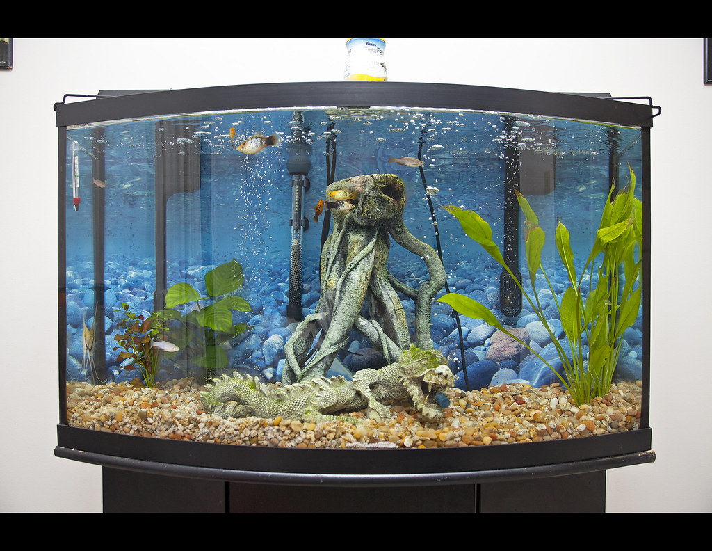 freshwater fish 37 gallon tank hi all 37 gallon tall