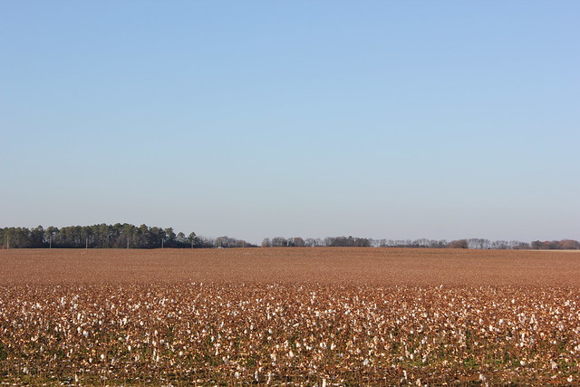 Cotton Field, North Alabama