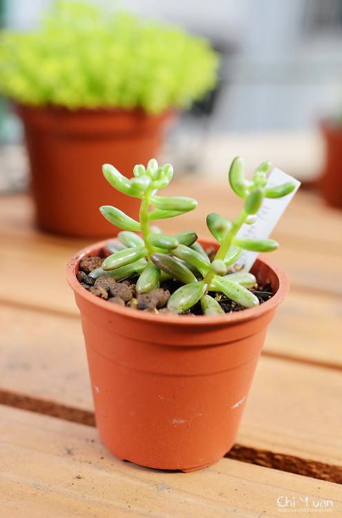 2012多肉植物10.jpg