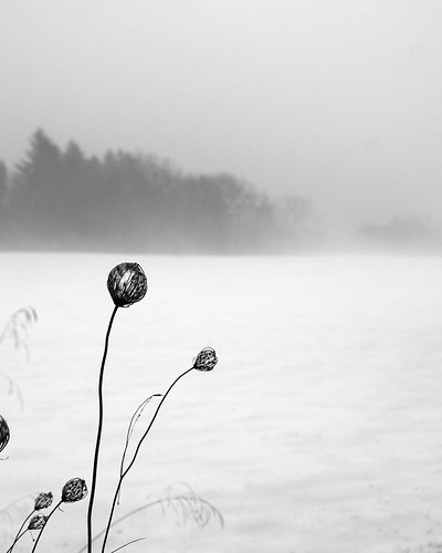 flowers bw white mist black nature fog landscape sony valley hudson alpha dslr hudsonvalley bwemotions a700