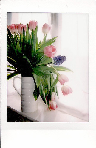 Tulip polaroid by PhotoPuddle