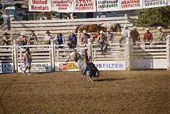 western riding(0.0), equestrian sport(0.0), fair(0.0), barrel racing(0.0), animal sports(1.0), rodeo(1.0), event(1.0), sports(1.0), bull riding(1.0),