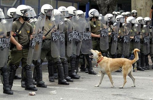 perro_manifestandose