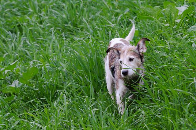 Schneider Farm Dog Day Kitchener