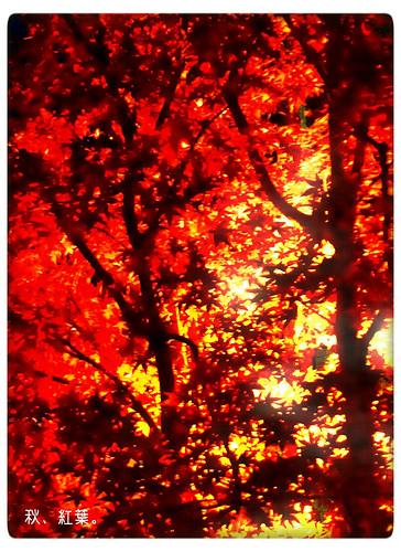 秋、紅葉。