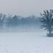 Misty field by mislav-m