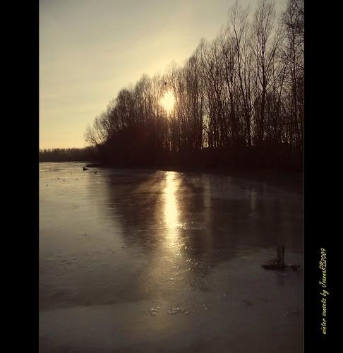 trees winter sunset sun lake cold reflection ice water landscape frozen frost january poland polska natyre jeziorsko