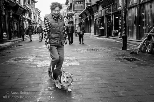 china street woman dog cn market candid beijing stick corgy disipline