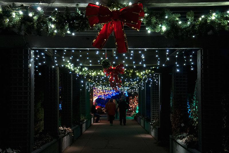 Denver Botanic Gardens Holiday Lights Passages 5280 Lens Mafia